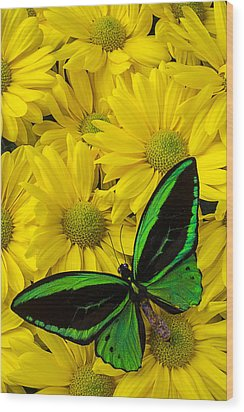 Green Butterfly On Yellow Mums Wood Print by Garry Gay