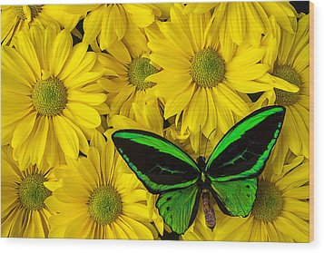 Green Butterfly Resting Wood Print by Garry Gay