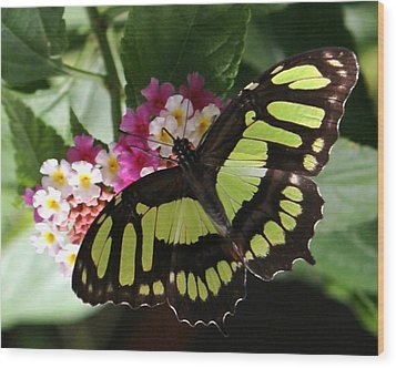 Green Butterfly With Flowers Wood Print