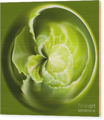 Green Cabbage Orb Wood Print