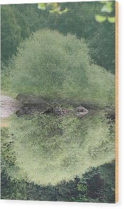 Green Clam Reflection Wood Print