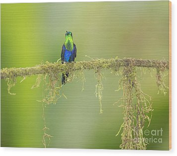 Wood Print featuring the photograph Green-crowned Woodnymph Hummingbird by Dan Suzio