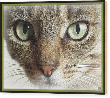 Green Eyed Cat Face Wood Print by Heidi Manly