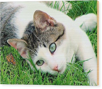 Wood Print featuring the photograph Green Eyed Cat by Janette Boyd