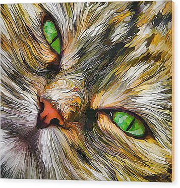 Green-eyed Tortie Wood Print by ABeautifulSky Photography