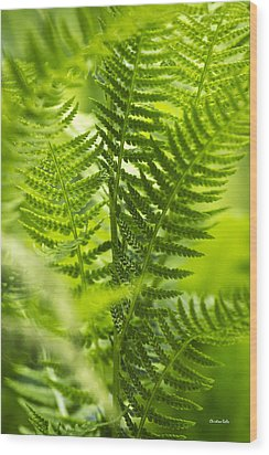 Green Fern Art Wood Print by Christina Rollo