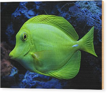 Green Fish Wood Print by Wendy J St Christopher