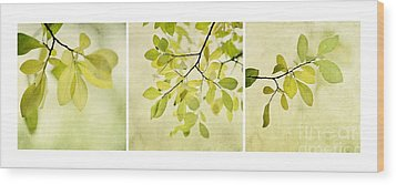 Green Foliage Triptychon Wood Print by Priska Wettstein