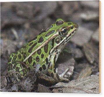 Green Frog Wood Print by Timothy McIntyre