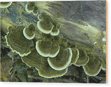 Wood Print featuring the photograph Green Fun Guys by Larry Bishop