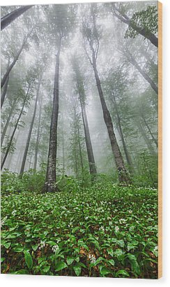 Green Giants Wood Print by Evgeni Dinev