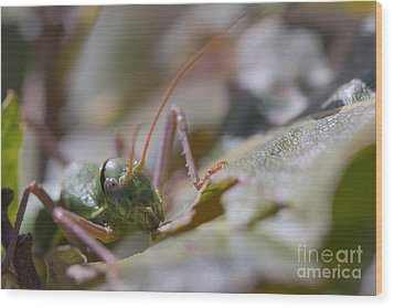 Wood Print featuring the photograph Green Grasshopper Ephippiger by Jivko Nakev