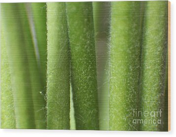 Wood Print featuring the photograph Green Hairy Stems Abstract by Eden Baed