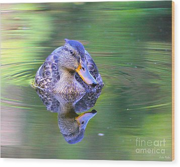 Green-headed Duck At Sunset Wood Print
