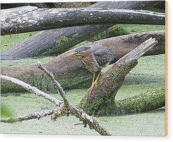 Wood Print featuring the photograph Green Heron - Camouflage by I'ina Van Lawick