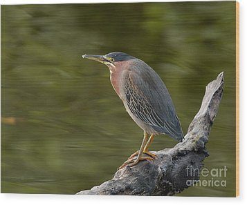 Green Heron Wood Print by Doug Herr
