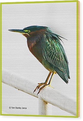 Green Heron In Scottsdale Wood Print