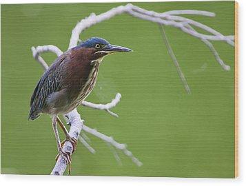 Green Heron Wood Print by Larry Bohlin
