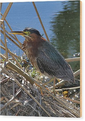 Green Heron  Wood Print by Mariola Bitner