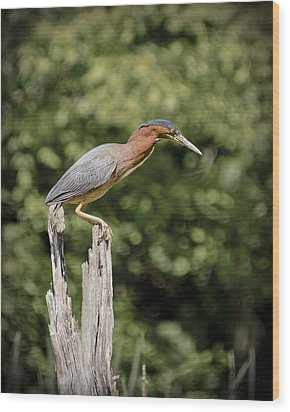 Green Heron On Stump Wood Print