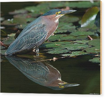 Wood Print featuring the photograph Green Heron Reflection 1 by Avian Resources