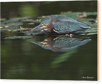 Green Heron Reflection 2 Wood Print by Avian Resources