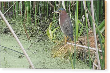 Wood Print featuring the pyrography Green Heron by Ron Davidson