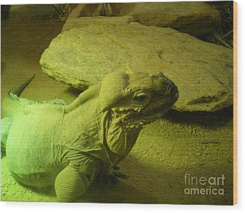 Green Iguana Wood Print by Ann Fellows