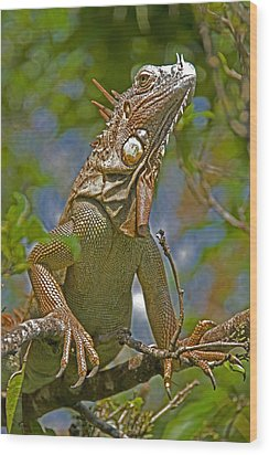 Wood Print featuring the photograph Green Iguana by Dennis Cox WorldViews