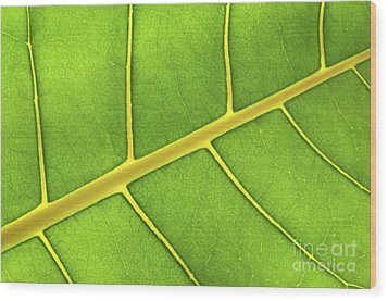 Green Leaf Close Up Wood Print by Elena Elisseeva