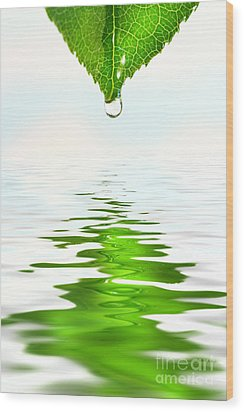 Green Leaf Over Water Reflection Wood Print by Sandra Cunningham