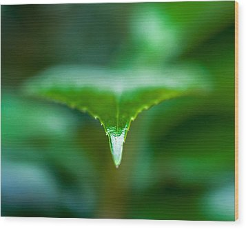 Green Leaf Wood Print