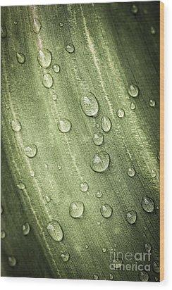 Green Leaf With Raindrops Wood Print by Elena Elisseeva