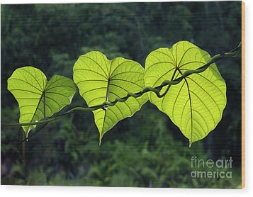 Green Leaves Wood Print by William Voon