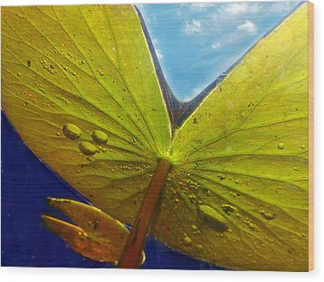 Green Lilly Pad Wood Print