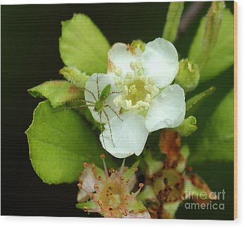 Green Lynx Spider On Blossom Wood Print by Theresa Willingham