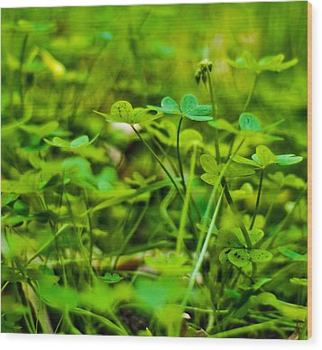 Green Morning  Wood Print by Andrew Raby
