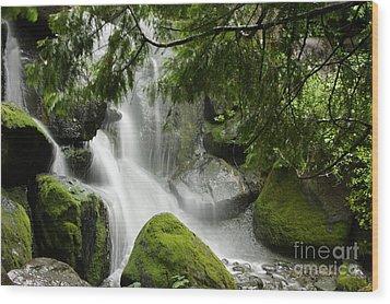 Green Moss Waterfall Wood Print