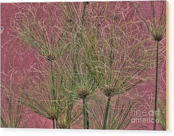 Green On Pink Wood Print by Deborah Smolinske