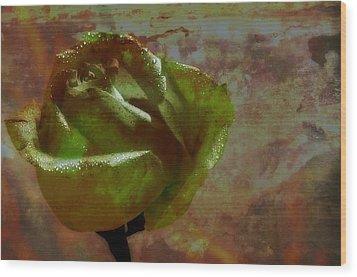 Green Rose Wood Print by Thomas Born