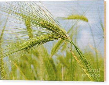 Green Rye Art Wood Print by Boon Mee