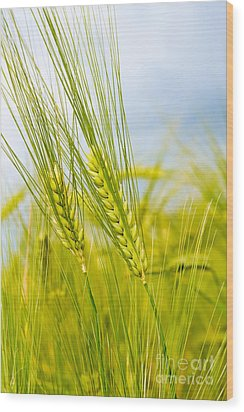 Green Rye Wood Print by Boon Mee
