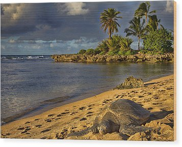 Green Sea Turtle At Sunset Wood Print by Douglas Barnard