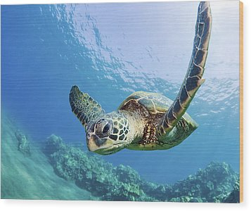 Green Sea Turtle - Maui Wood Print by M Swiet Productions