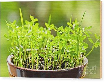 Green Spring Seedlings Wood Print by Elena Elisseeva