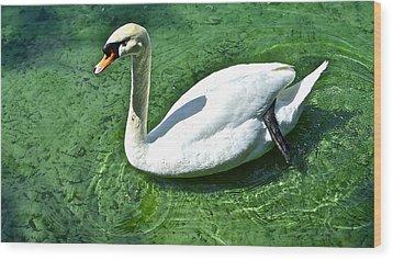 Green Swan Wood Print