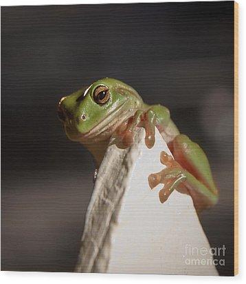 Green Tree Frog Keeping An Eye On You Wood Print