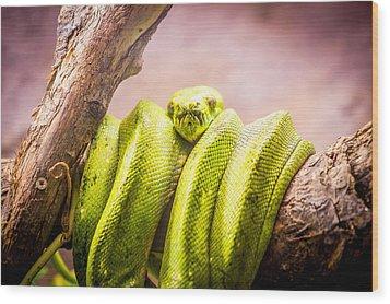 Green Tree Python Wood Print