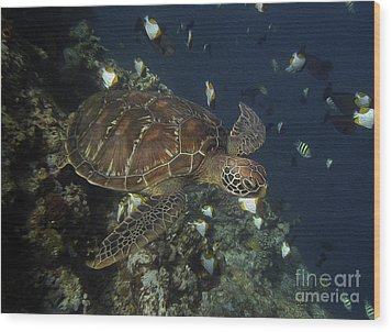 Wood Print featuring the photograph Hawksbill Turtle by Sergey Lukashin