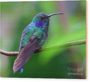 Green Violet Ear Hummingbird Wood Print